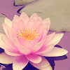 mixofsun: (daisy diary)