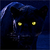 queenofhell: A drawn black panther at night, with glowing yellow eyes. (Panther)