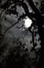moonwolf23: (pic#581996)