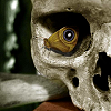 larxene: a skull with a moth sitting in the eye socket, creating the illusion of an eye with its wing (Default)