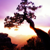 rivers_bend: (nature: tree sunset)