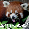 telaryn: (Happy Red Panda)