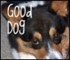 pwcorgigirl: (corgi good dog)