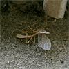 bodlon: (dimlight - insect)
