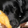 bluespirit: (Buddy sleeping)