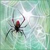 spider_fox: (glow spider)
