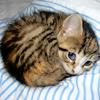 dchan: A kitten curled up into a small ball (kitten ball)