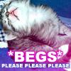 green_wing: (Kitten - *Begs*)