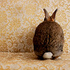 ofearthandstars: A bunny facing away towards paisley wallpaper. (bunny butt!)