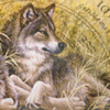 wyn: (Beliefs: Wolf: My Alpha)