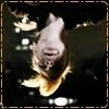 ext_51: Parker from Leverage hanging upside-down, gleeful. (Default)