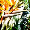 bri_ecrit: (Birds of Paradise) (Default)