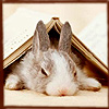 vanessamac: (Book bunny)