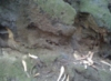 peoppenheimer: Photo of interesting tree stump in forest. (Default)