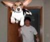cheekbones3: (Flying dog)