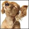 ejia_arath03: (puppy)