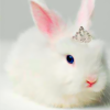 beatrice_otter: Plot Bunny Princess (Plot Bunny Princess)