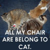 flewellyn: (All my chair are belong to cat)