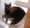 lee_rowan: cat (spenser in the sun)
