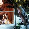 fates_illusion: (Owl Perched Night)