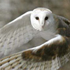 fates_illusion: (Owl/Flying)