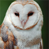 fates_illusion: (Owl/Looking)