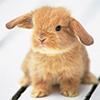 easilyflustered: (baby bunnified)