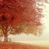 gfrancie: (Fall)