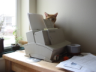 pmb: (kitty behind printer)