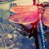 everythingiam: (NATURE :: Dragonfly)