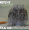 drgnhlr: grumpy owl (grump)