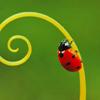 threesixfour: (ladybug)