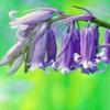 threesixfour: (garden)