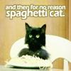 teapotgirl: (spaghetti cat)