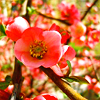 permaculture: photo of a fruit tree in bloom (bloom)