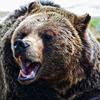 stronglikebear: (.bear   back off)