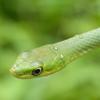 ambersnake: (snake-blurry)