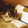 next_to_normal: (kitty reading)
