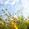 cathalin: (Wildflowers)
