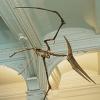 pteranodon: (Default)