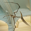 pteranodon: (pic#5930298)