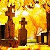 daemonluna: Sunlit graveyard in the fall (sunlit graveyard)