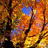 daemonluna: Autumn trees (fall trees)