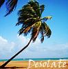sgorny: (desolate palm tree)