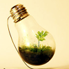 ariandar: (planted lightbulb)