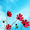 audenrain: (misc // Flowers & sky) (Default)