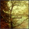 mirabella: (Autumn trees)