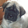 a_talking_puppy: (The awesomeness of my puppy cuteness)