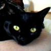 swordage: My cat Nostalgia. (asst Nostalgia)