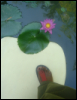 alexicyn: photo of my foot near a water lily in Thailand (pic#5938761)